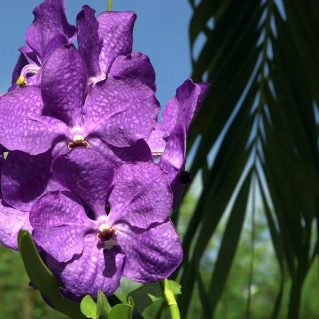 Purple orchid flowers at Casa Angular, a Vieques luxury villa rental in the Puerto Rico archipelago.