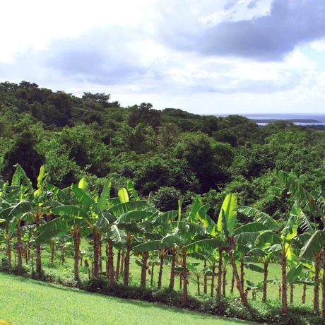 Caribbean villa banana grove at Casa Angular, a luxury Vieques vacation rental house.