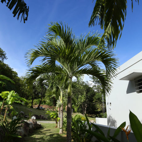 Palm trees at Casa Angular entrance